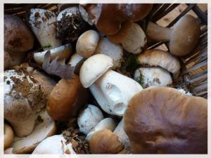 Les champignons, l'une des richesses de la forêt des Bellême