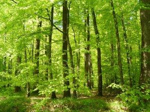 La forêt de Bellême